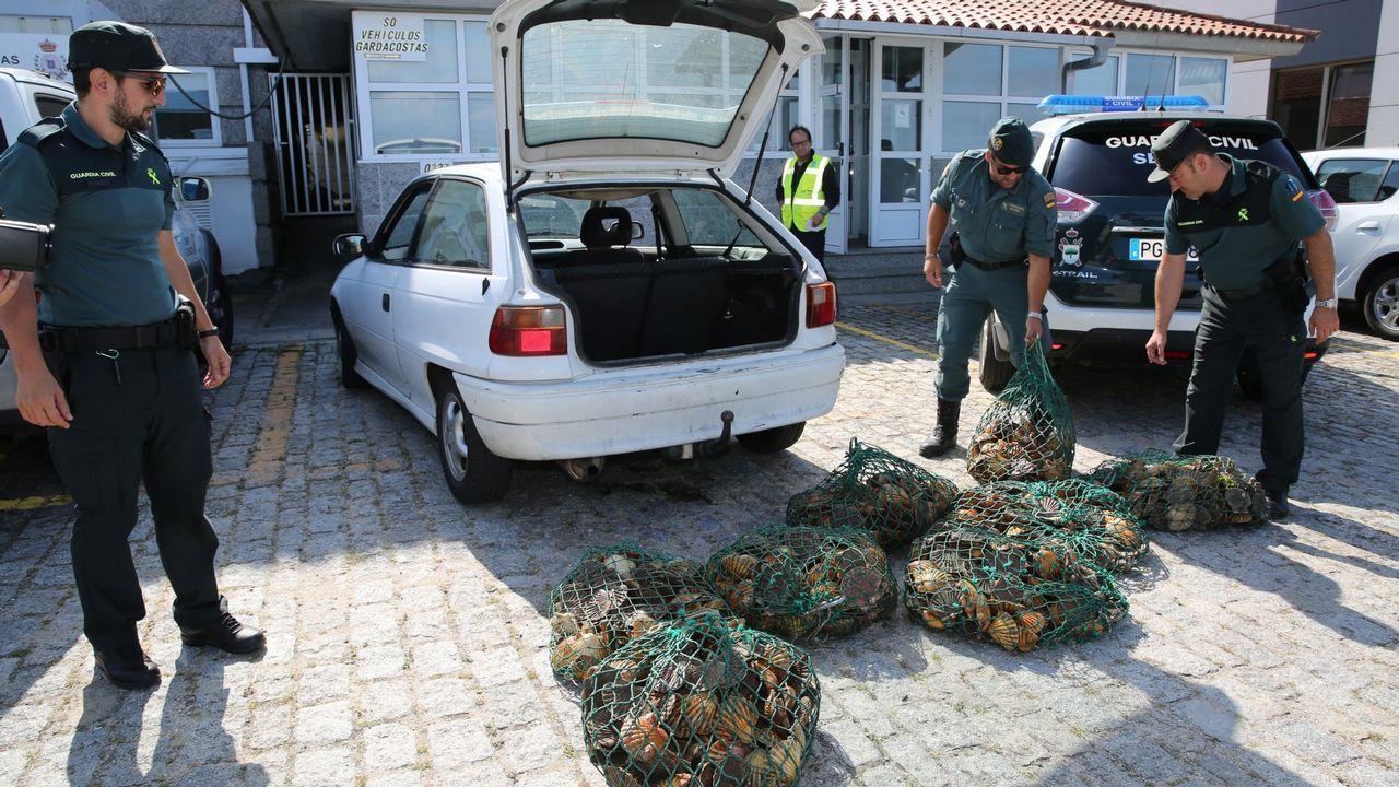 Diez toneladas de almeja intervenida y más de veinte empresas investigadas por la comercialización ilegal de marisco portugués.VIEIRA DE LA RÍA FERROLANA DECOMISADA EN AROUSA