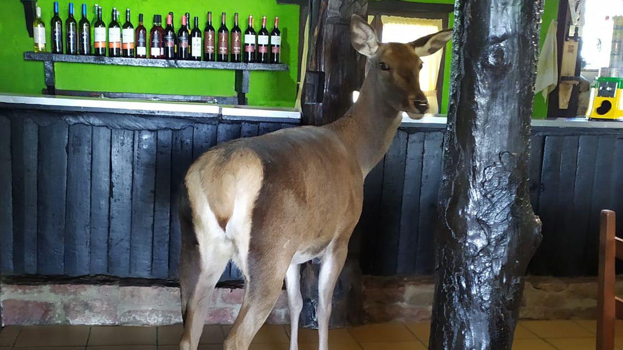 Ciervo dentro del bar