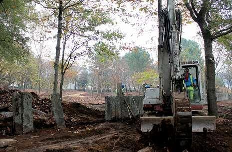 El antiguo bosque de robles, castaños y pinos se está transformando.