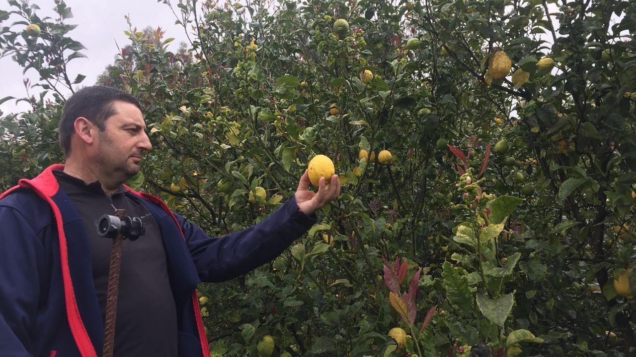 La plantación de cítricos de Justino Fernández tiene unas dos hectáreas de superficie