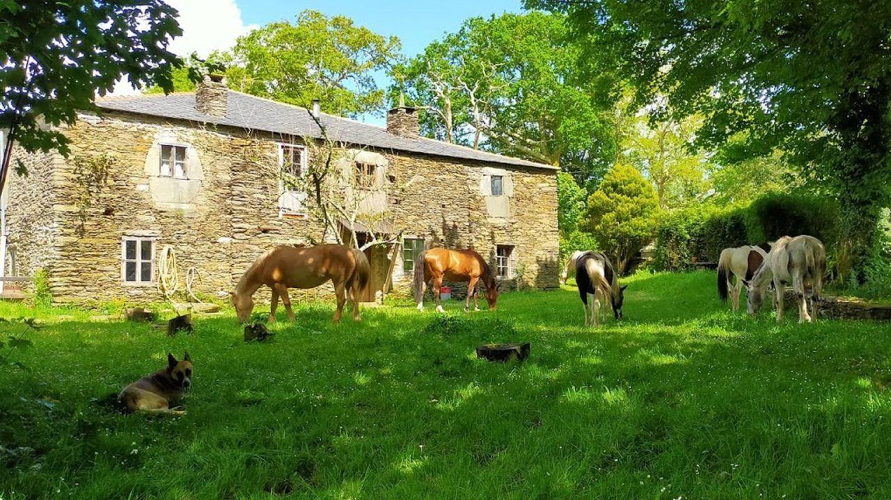 En la granja tienen cinco caballos y un poni, gallinas, perros y un gato
