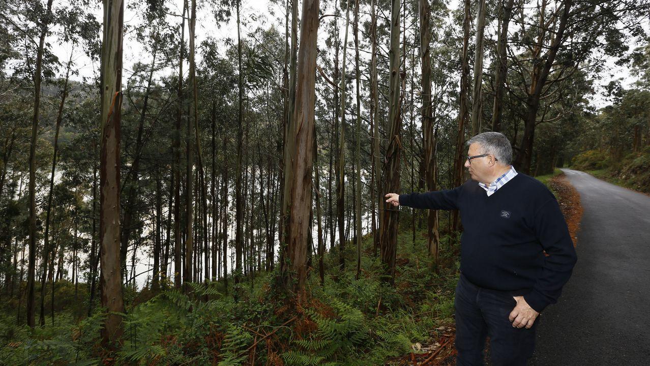 El productor José Luis Solloso muestra una plantación en el entorno de Viveiro