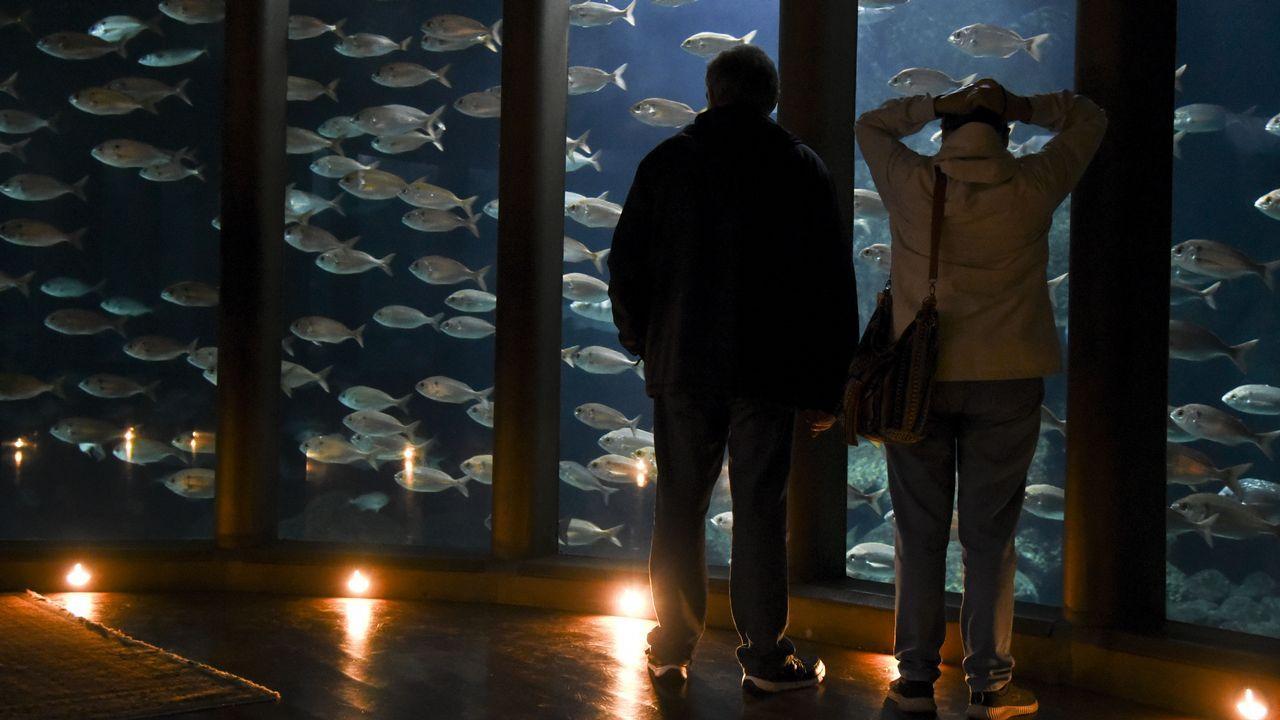 La Casa de los Peces inicia su «nueva normalidad».Aquarium Finisterrae