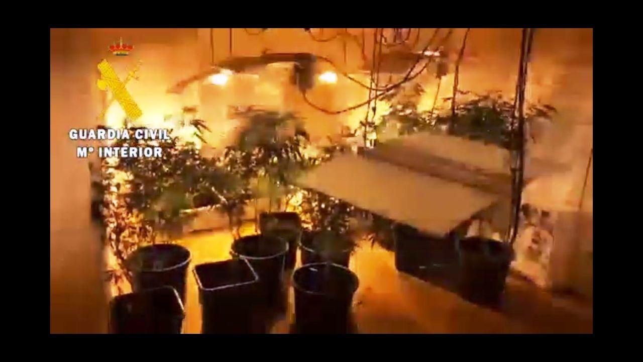 Plantación 'indoor' de marihuana