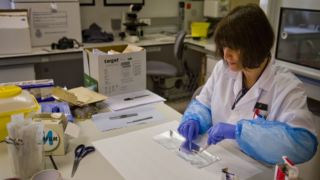 Una especialista de la Policía Científica analiza una muestra biológica en el laboratorio de ADN de A Coruña
