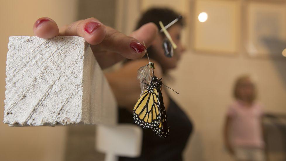 «¿Por qué todos los capullos no se convierten en mariposas?»