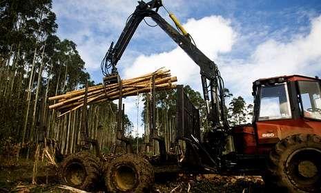 En la fotografía, una carga de madera en la zona que va entre Cedeira y San Andrés.