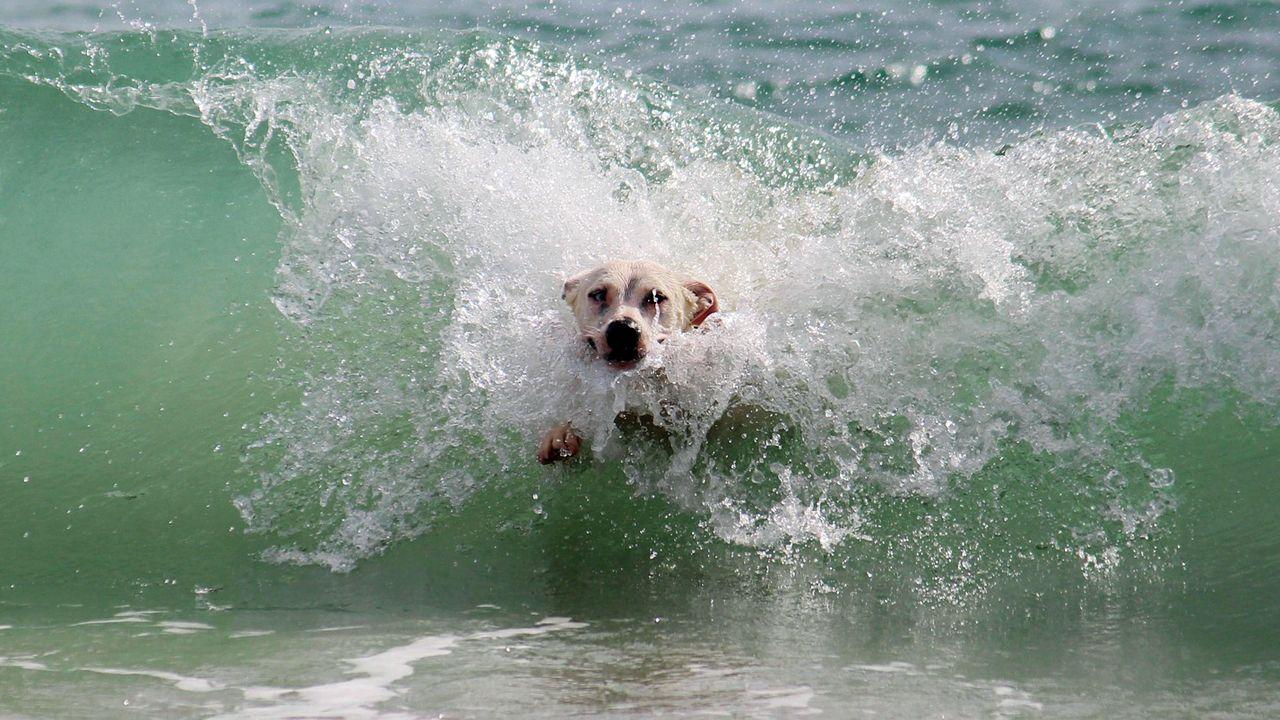 perro playa.Autobuses de Alsa