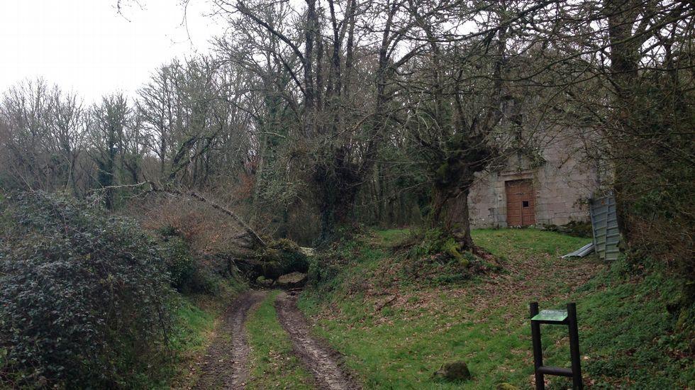 Una asociación pide el traslado del árbol a un lugar visible