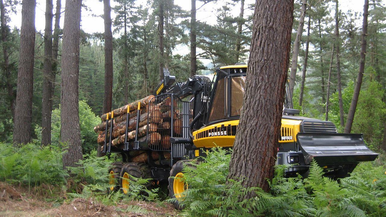 La cantidad de madera comercializada en la comarca aumentó un 15 % en el último ejercicio