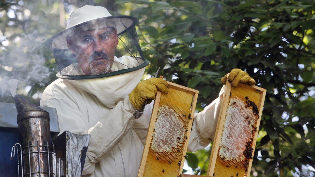 A apicultura é unha actividade tradicional que está experimentando un notable auxe na Serra do Courel nos últimos anos