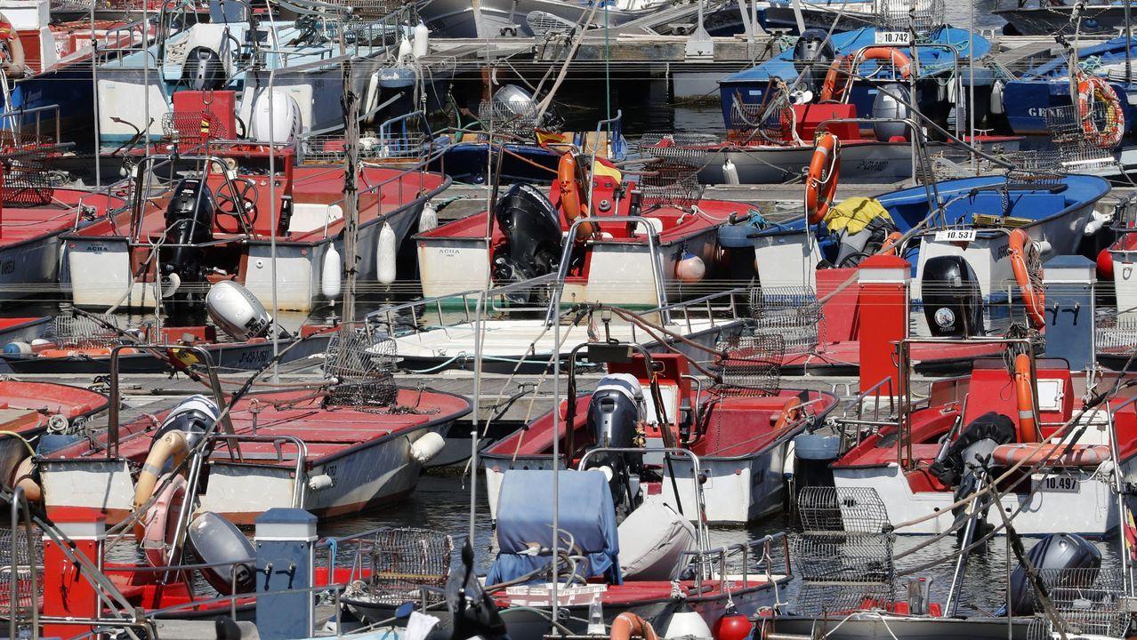 La xarda que donan las lanchas artesanales de Celeiro y O Vicedo se conserva en las cámaras de Puerto de Celeiro