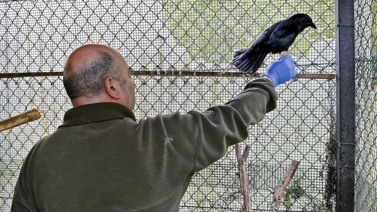 Los cuervos mutilados con segunda vida