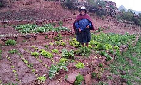 <span lang= es-es >Panxea</span>. Esta organización realiza en Santiago una labor de sensibilización para fomentar la compra  en los establecimientos de Comercio Justo. No desplaza personal a Bolivia, donde se paralizaron las segundas fases de proyectos vinculados a horticultura y mejora de especies animales.
