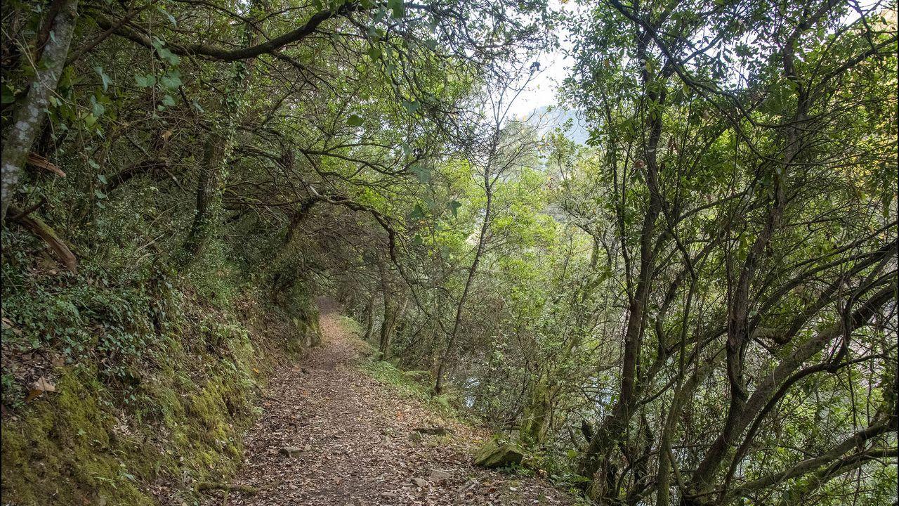 La ruta discurre en parte por zonas boscosas