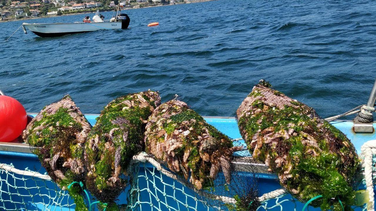 Las estrellas de mar, un peligro para la ría de Pontevedra.Restos de basura tras un botellón nocturno en el puerto de Portonovo