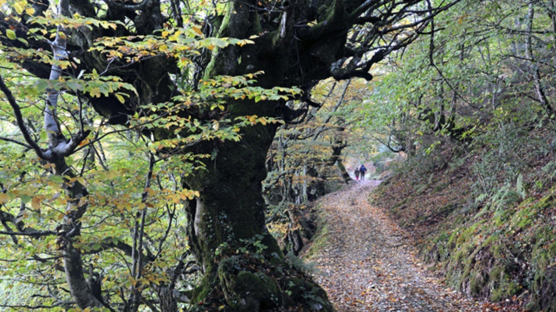 Bosque de Mual