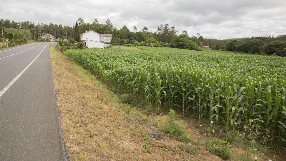 La Feira da Horticultura de Paiosaco, en imágenes.Los pasos pretenden frenar las carreras de coches de la zona