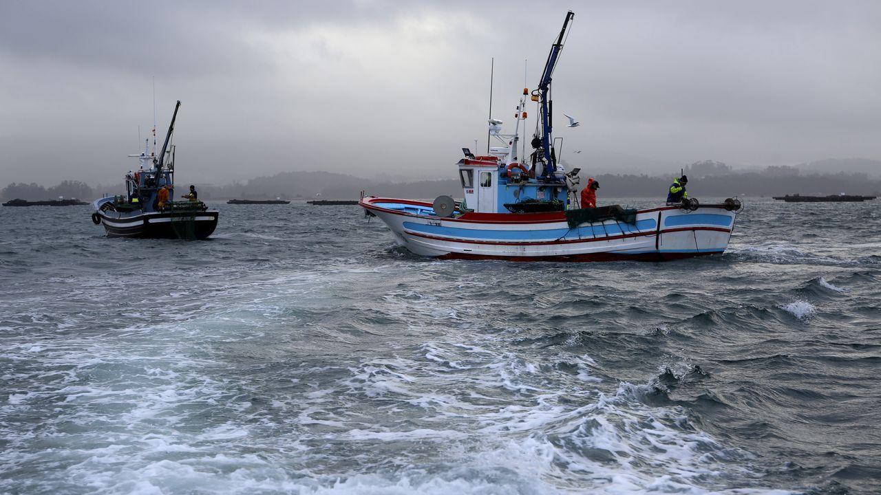 Apertura da veda da vieira en Cambados.Imagen del narcosubmarino en el puerto de Aldán
