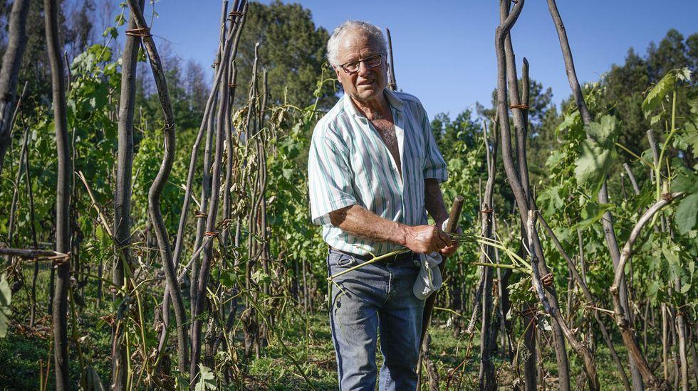 José Carrera muestra los destrozos que los corzos han hecho en sus viñedos en Carballeda de Avia