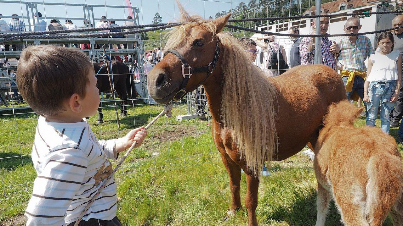 Los más pequeños disfrutaron especialmente de los ponis y los caballos