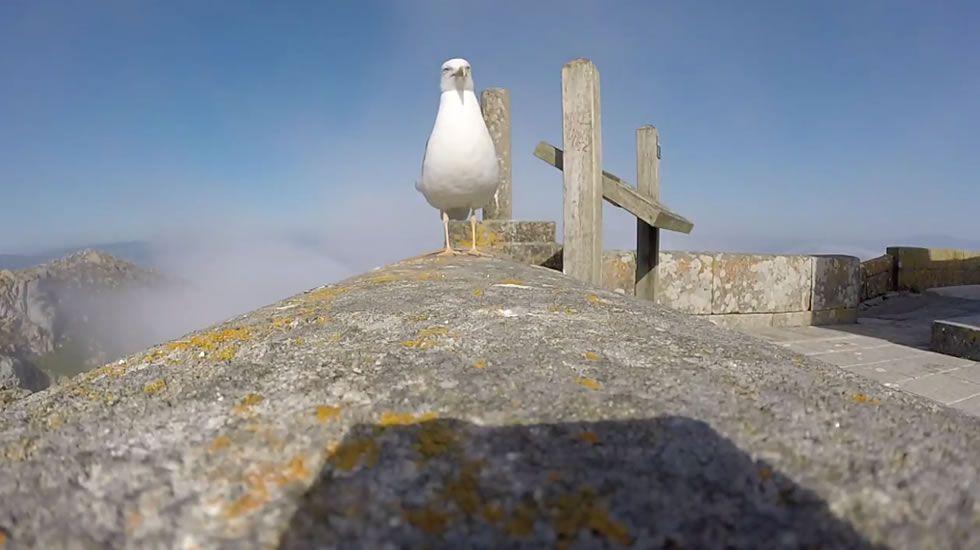 Vídeo de la gaviota y la cámara «GoPro»