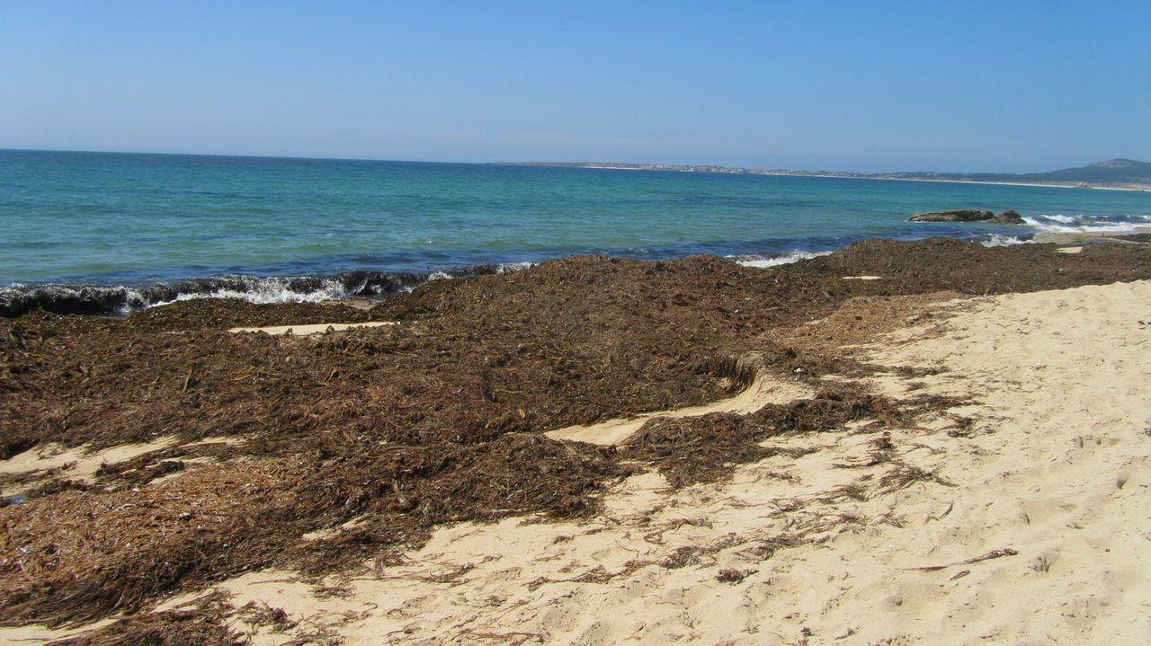 playa de o vilar. ribeira. montones de algas en el arenal