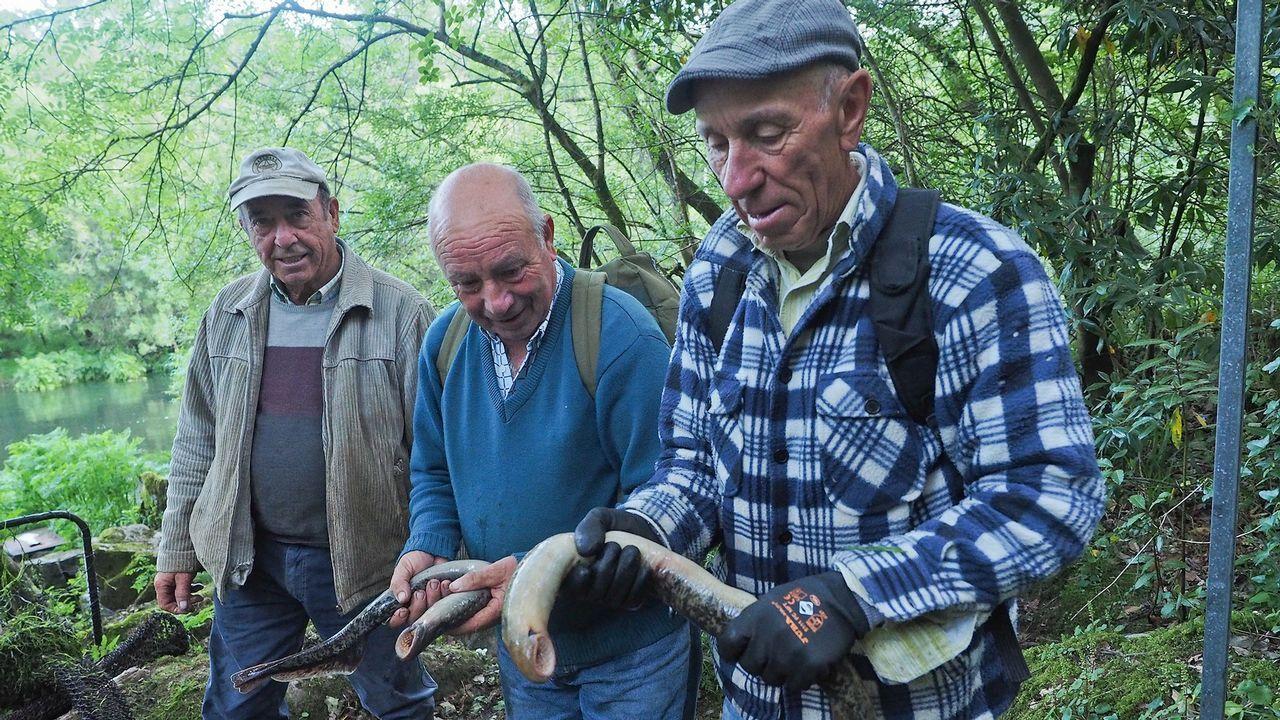 La pesca de la lamprea, en imágenes