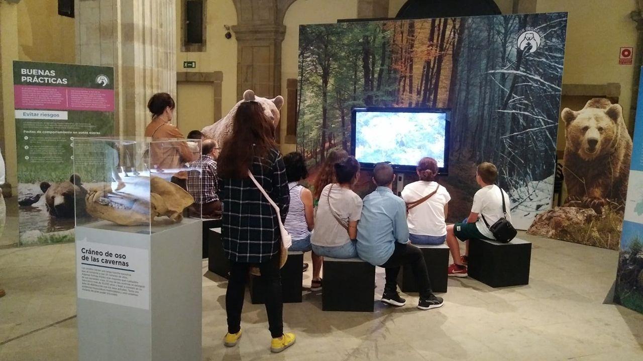 La princesa y su hermana participan con los reyes en las audiencias en Oviedo.Exposición «Vivir con Osos» en Gijón
