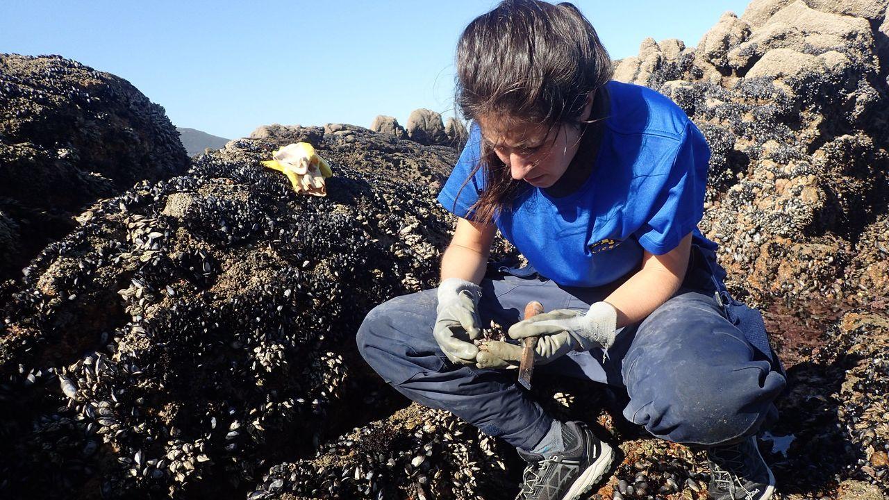 Pablo Junceda.Alba Aguión investiga la adaptación del percebe al cambio climatico