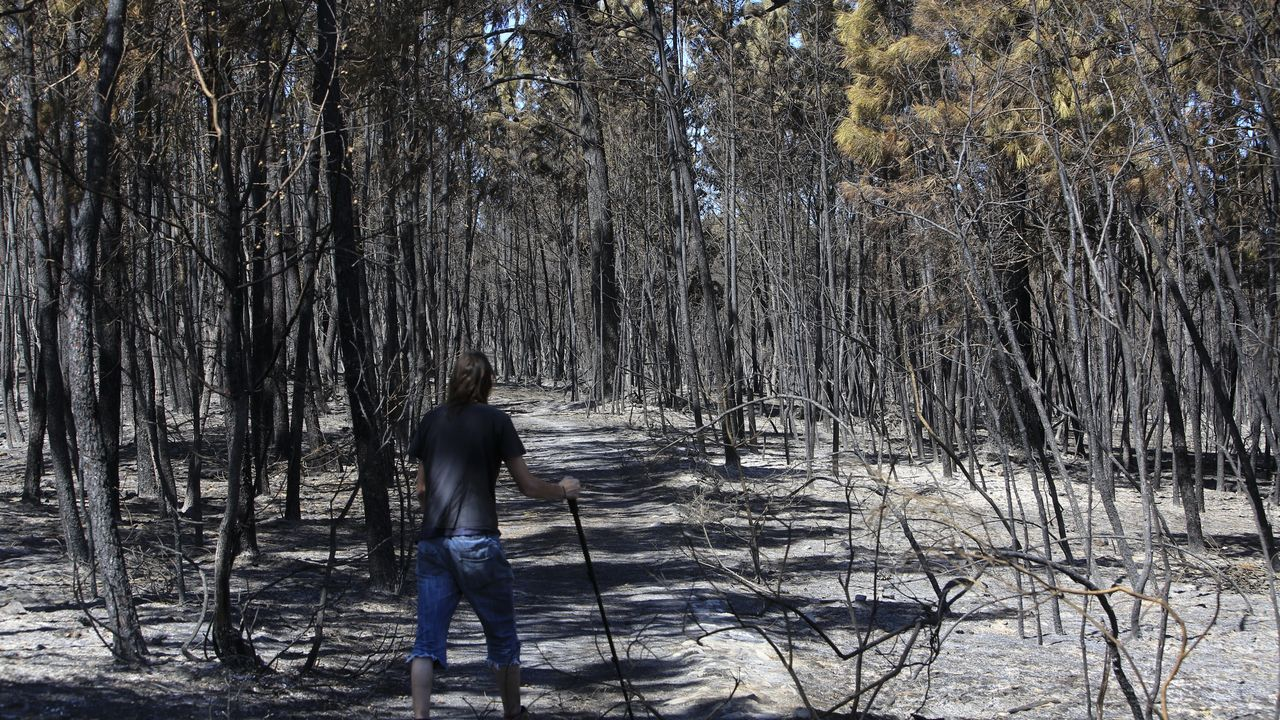 Un pinar quemado entre las parroquias de Seoane y Moreda
