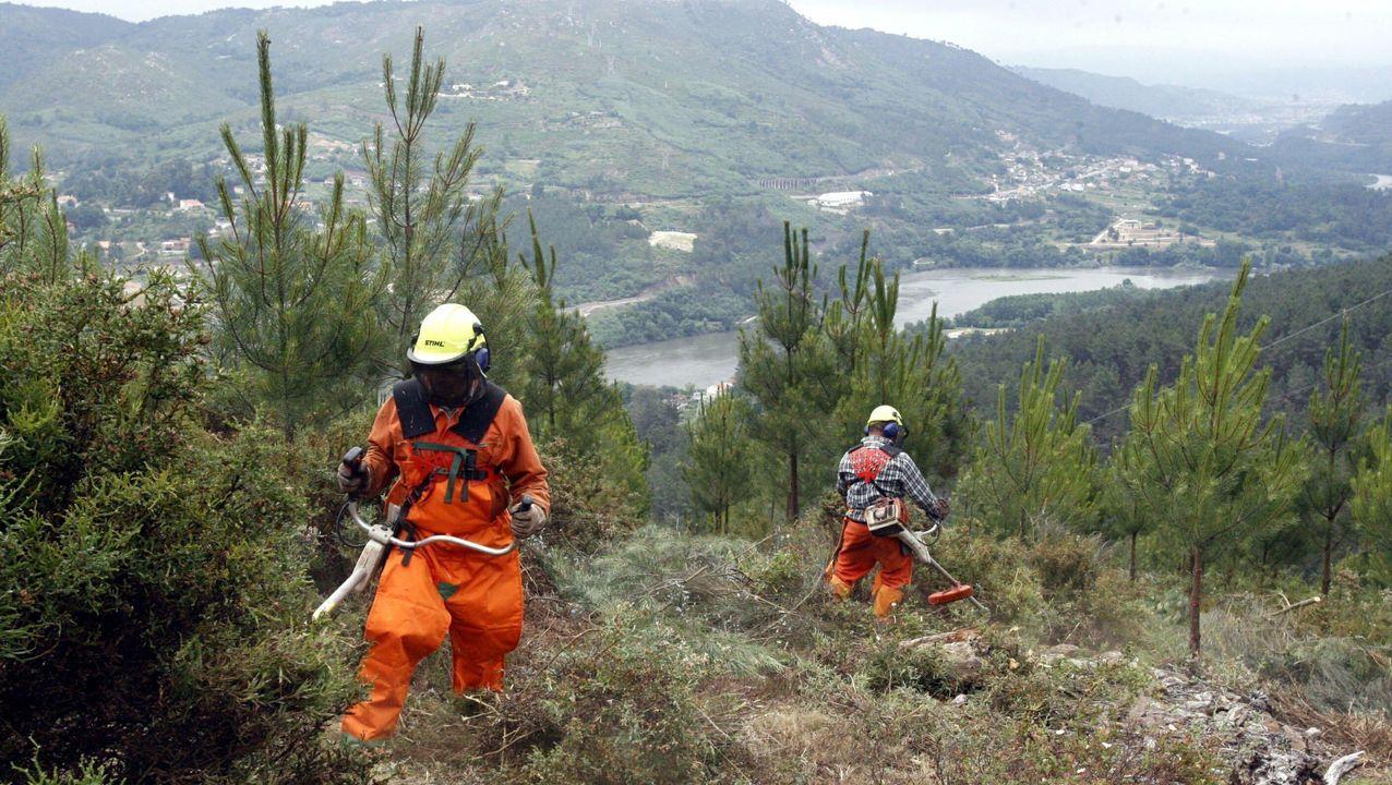 Trabajadores limpiando montes para prevenir incendios
