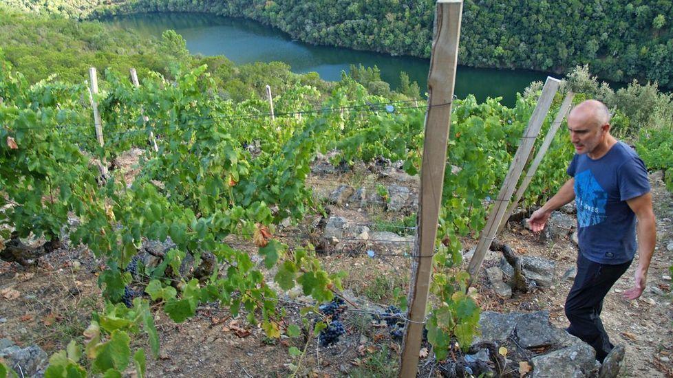Lo que se cuece estos días en las bodegas de Ribeira Sacra.Antonio Anglada en su viña plantada con mandó en Vilacha de Salvadur