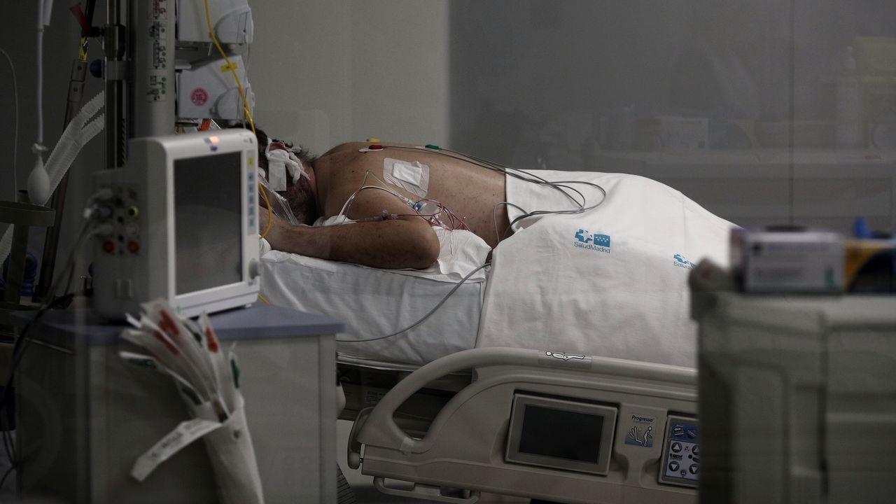 El perro Topi por fin puede viajar a su nuevo hogar.Un enfermo en una cama de cuidados intensivos del Hospital de Emergencias Isabel Zendal de Madrid