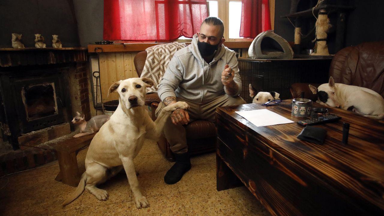 Lázaro fue el primer perro al que se le extrajo su ADN para ayudar a resolver un caso de maltrato animal en España..Un enfermo en una cama de cuidados intensivos del Hospital de Emergencias Isabel Zendal de Madrid