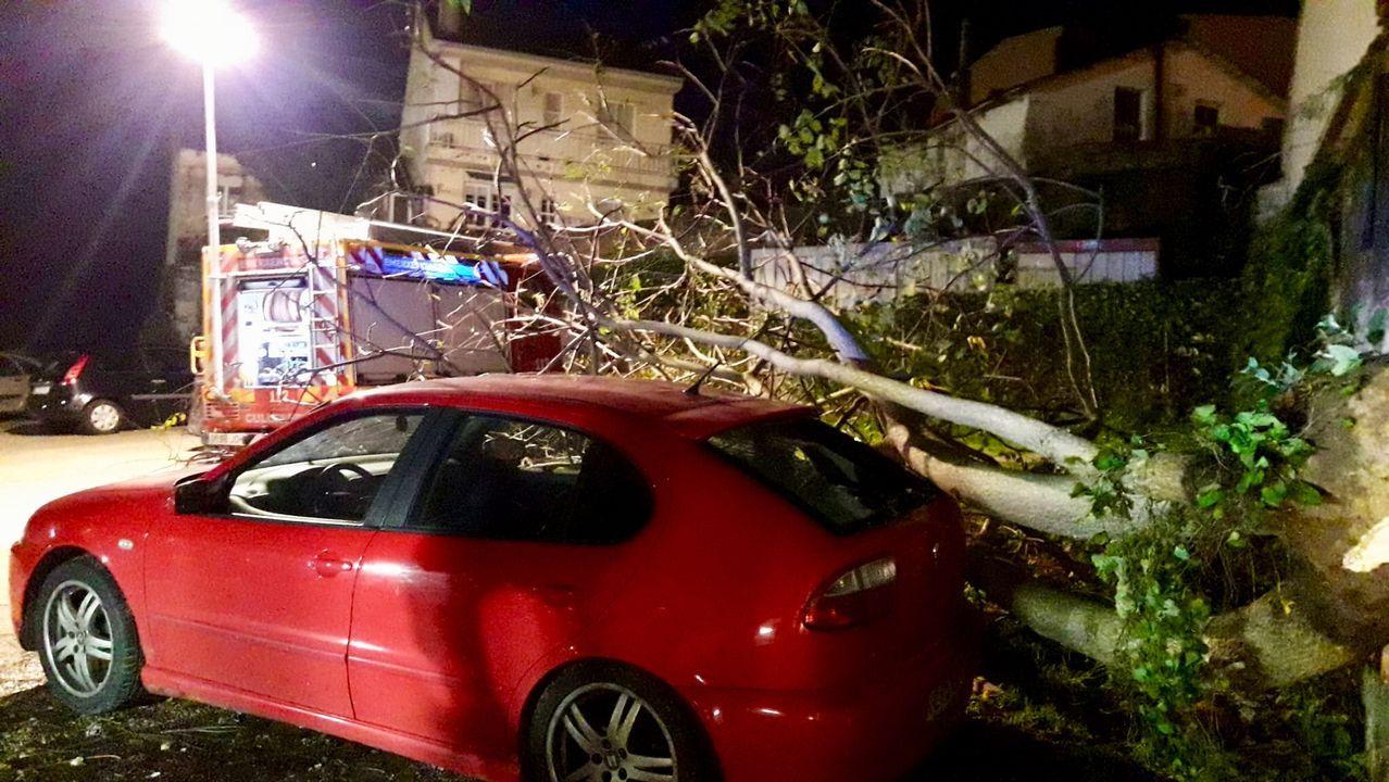 Árbol caído en O Burgo, en la calle Alexandre Bóveda