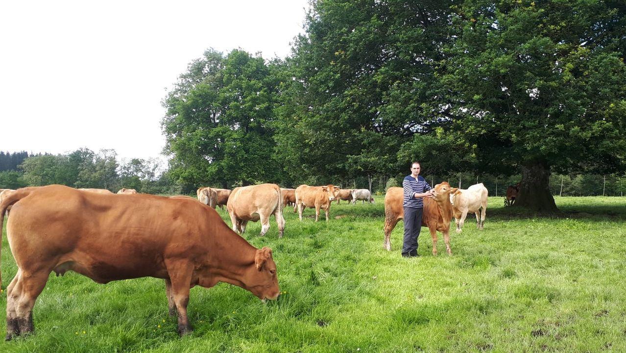 Pablo Díaz ayer junto a parte de su rebaño de vacas rubias en O Corgo