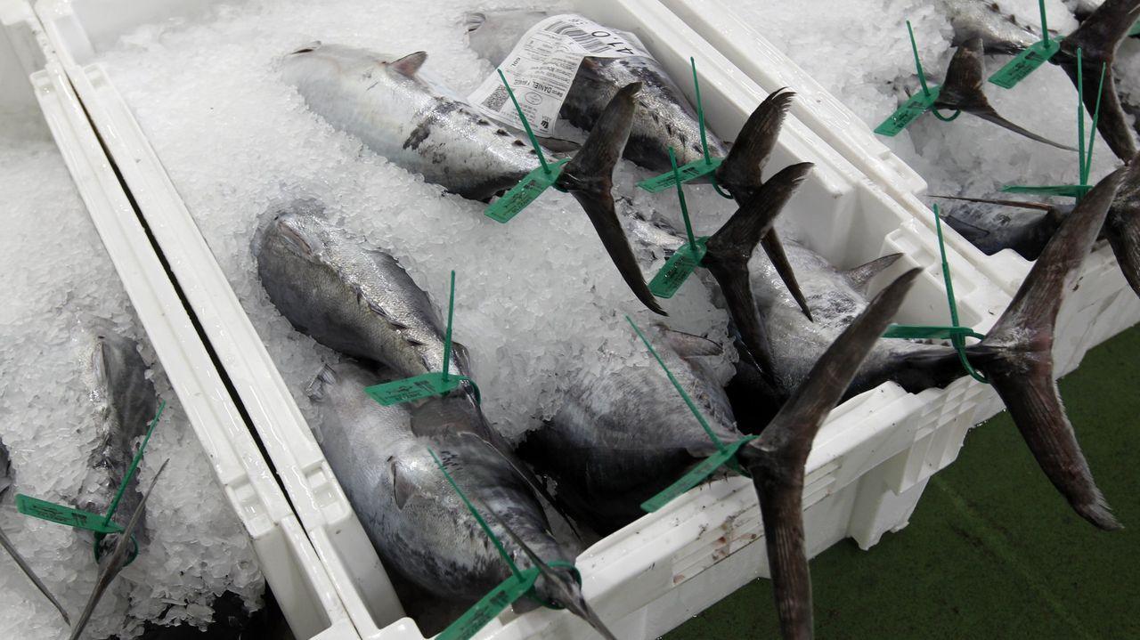 Bonitos del norte en la lonja de Burela, referente gallego y nacional en el mercado de ese pescado azul de temporada (foto de archivo)