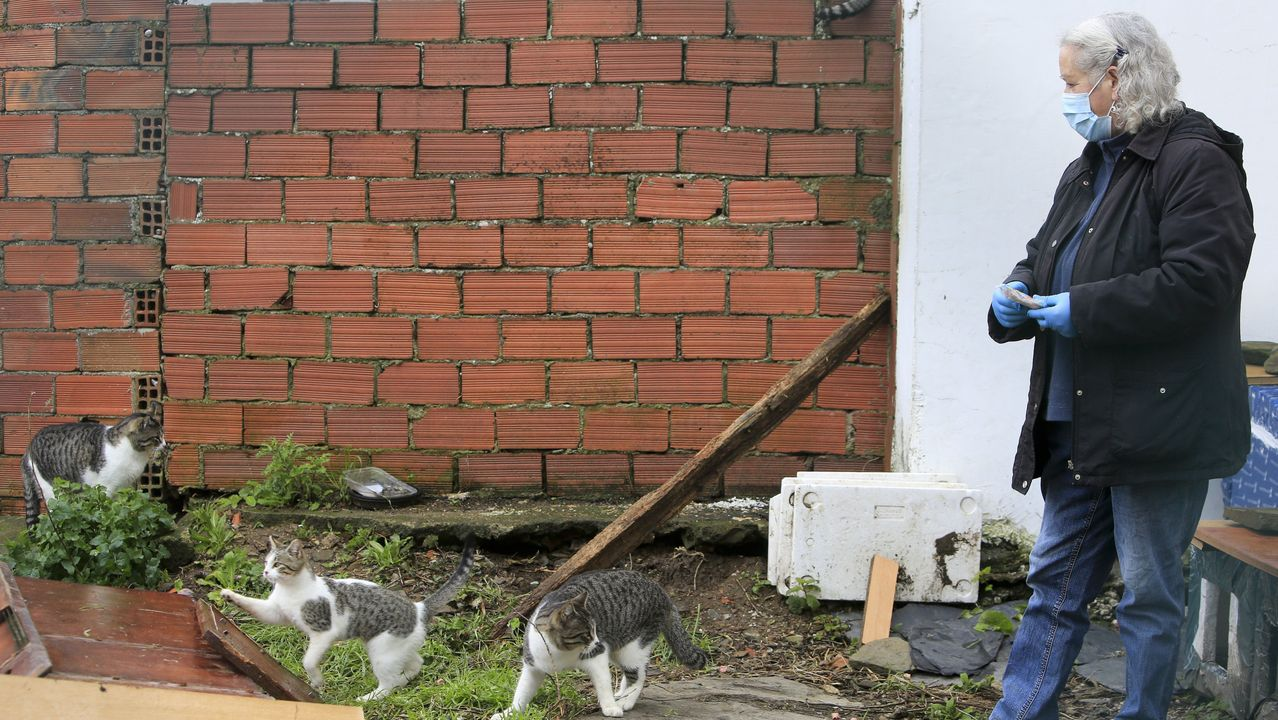 Elvira es una de las cuidadoras de colonias felinas de la ciudad