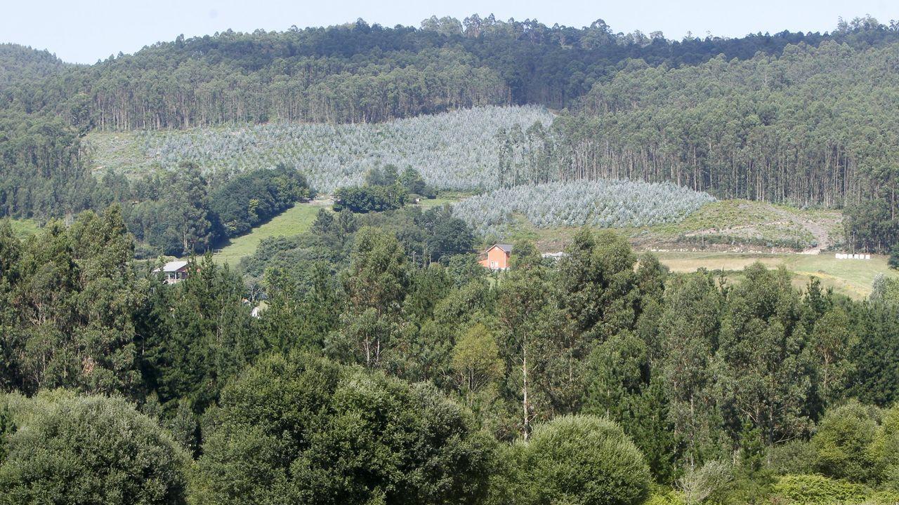 Área recreativa junto al pantano de San Xoán, dentro de la comunidad de montes de Lagostelle
