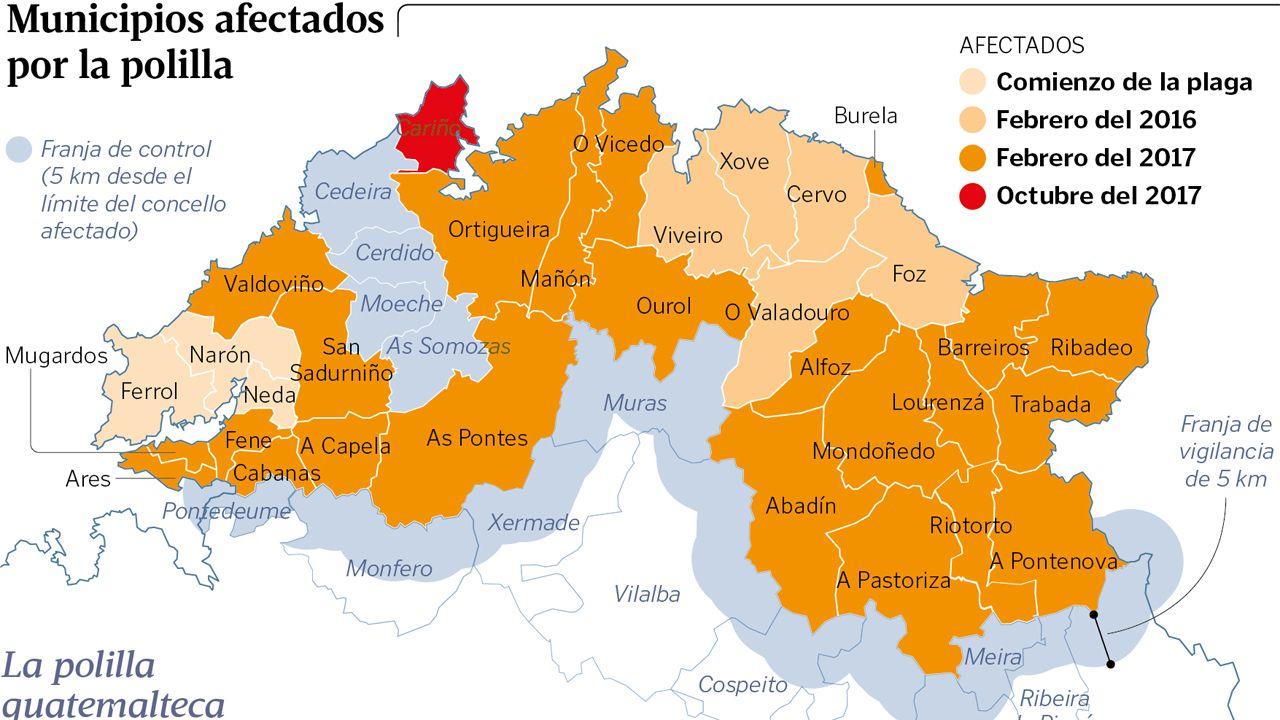 Municipios afectados por la polilla