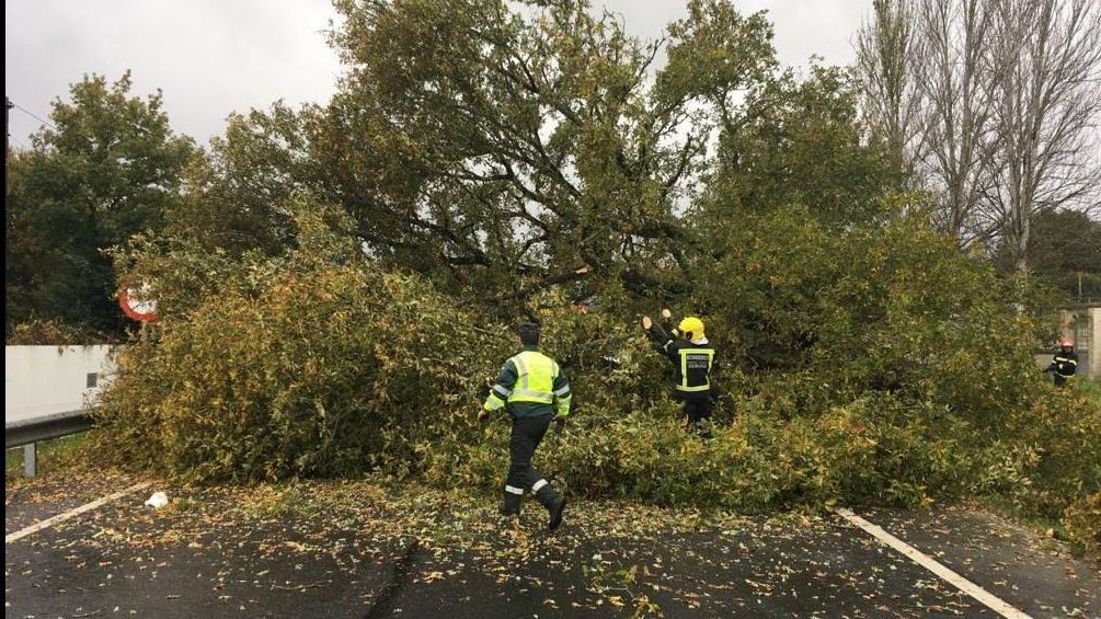 Temporal en Ourense.La caída de un árbol afectó a la N-525 en Porto Alto (Xinzo de Limia). Intervinieron la Guardia Civil de Tráfico, Protección Civil y bomberos