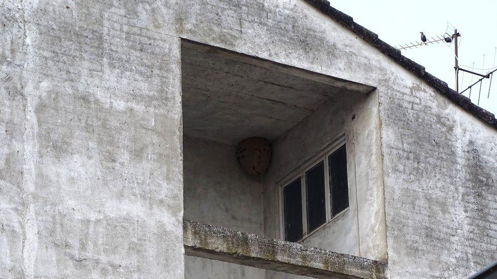 La penetración de la velutina. En el mapa, la presencia del avispón asiático en esta parte del interior de Galicia, en función de los nidos localizados entre el 1 de enero y el 9 de septiembre de este año. En rojo oscuro, más de 100 nidos; en rojo más claro, entre 26 y 100; en rosa, entre 6 y 25; en naranja entre 2 y 6; en azul uno; y en amarillo los municipios en los que no se ha visto ninguno