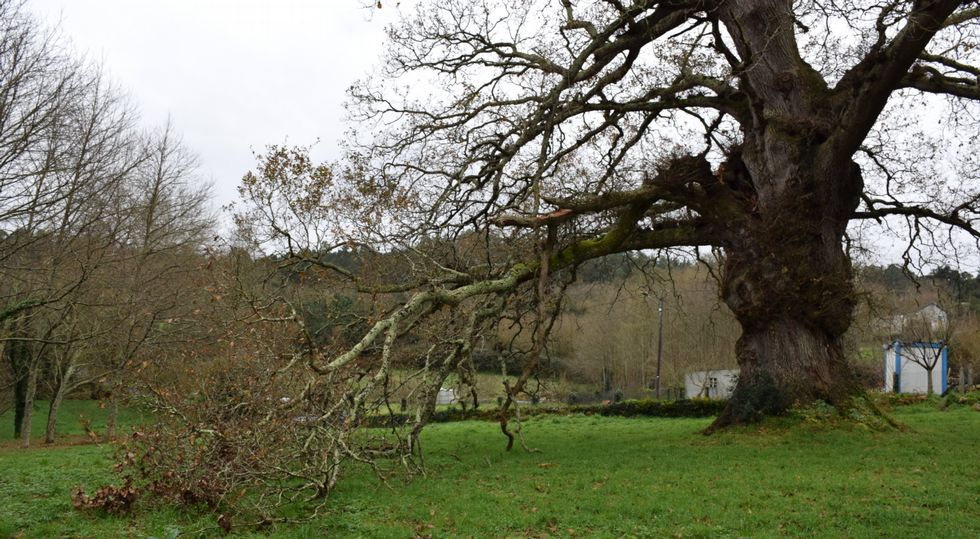 La rama principal, además de otras dos pequeñas, lleva ya varios días sobre el suelo, a la espera de que se pueda cortar.