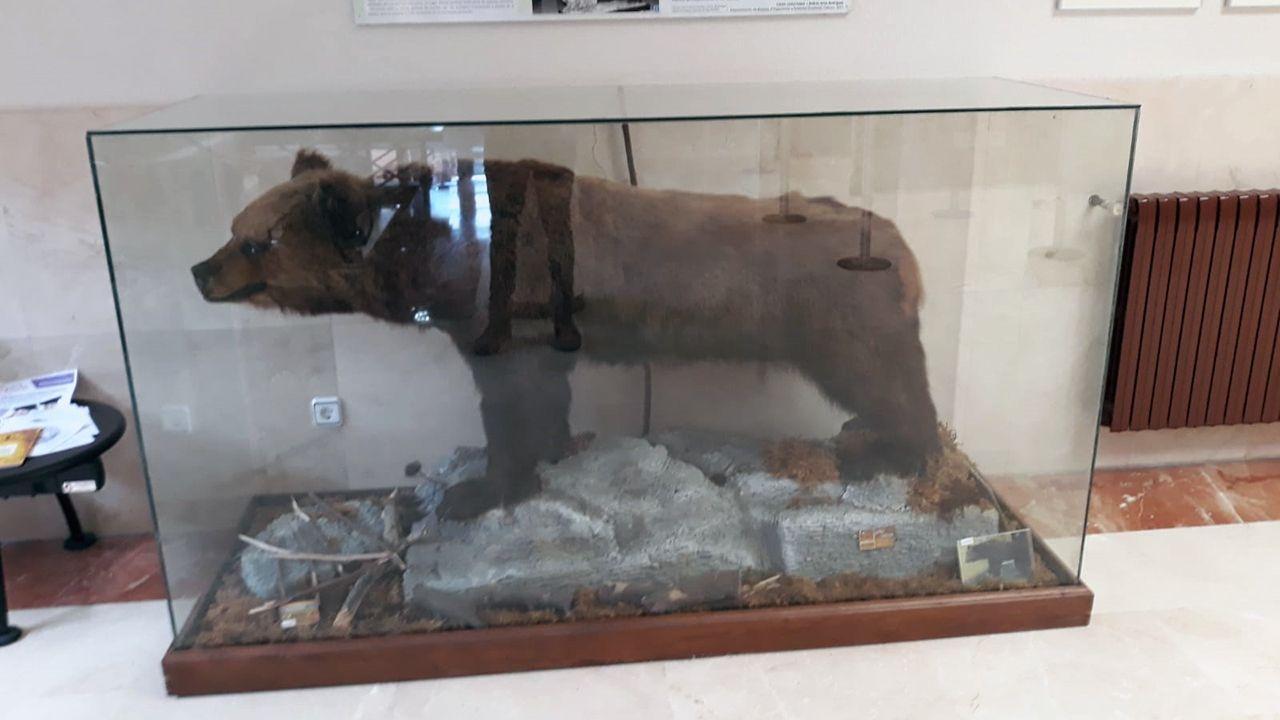 El oso Perico en la Facultad de Biología de la Universidad de Oviedo