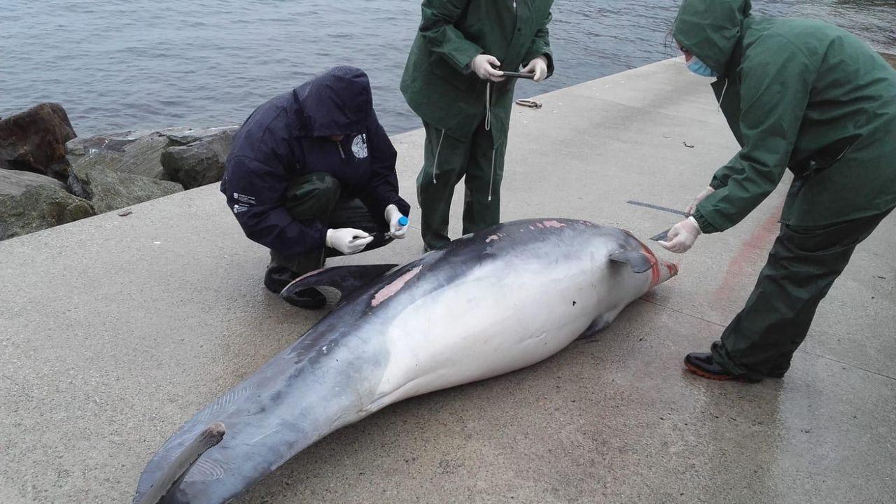 Un grupo internacional de expertos en mamíferos marinos ha conseguido finalmente identificar a estas orcas