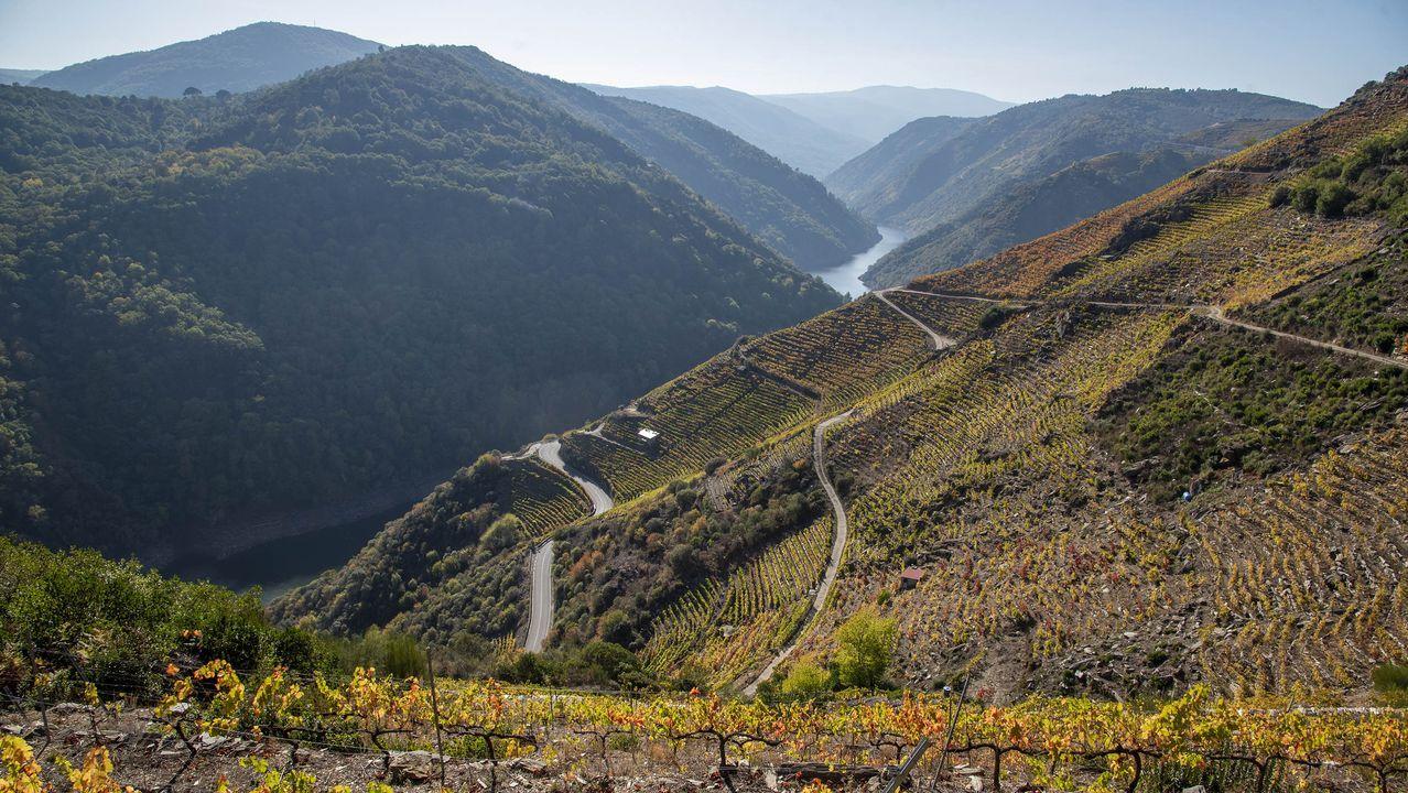 Otra vista del cañón del Sil y los viñedos de Doade desde el camino de los miradores