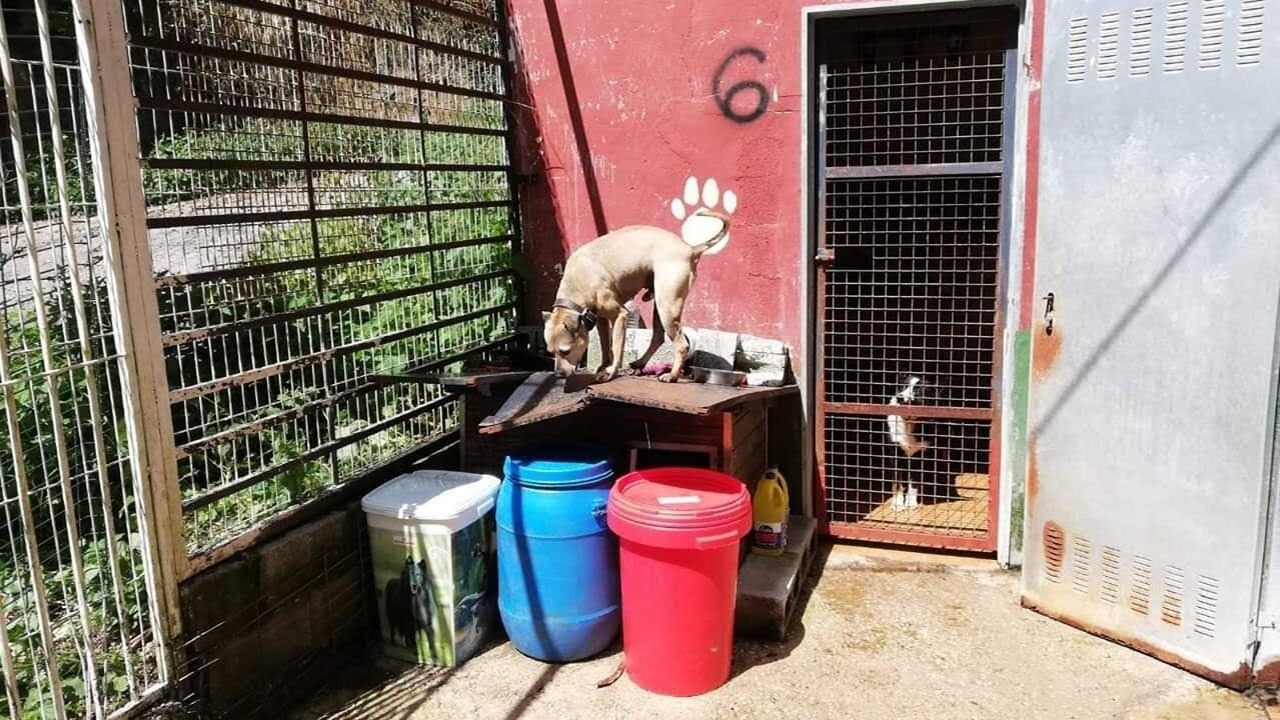 Perros en el albergue de Mieres