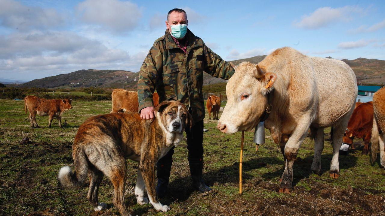 Ganaderos de A Lama hablan sobre cómo afecta el lobo a sus cabañas ganaderas.Zona de urgencias del Hospital da Mariña, en Burela