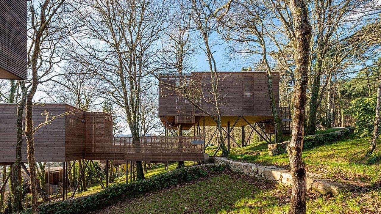 Rehabilitación del Arquivo Histórico Provincial.Los alojamientos se levantan sobre estructuras de madera para respetar las raíces de los árboles